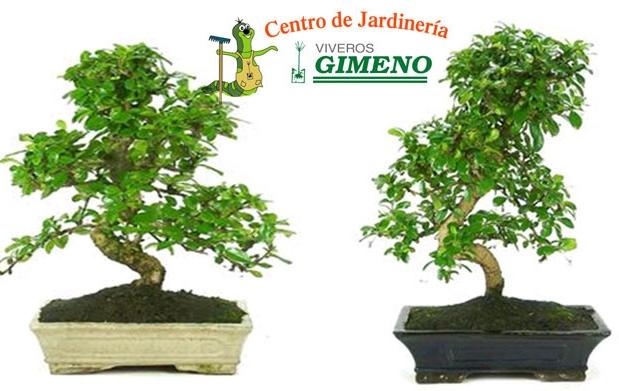 Bons i carmona y libro de plantas 11 95 descuento 47 - Libros sobre bonsai ...
